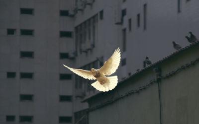 Lo Spirito Santo, la legge di Dio e la misericordia